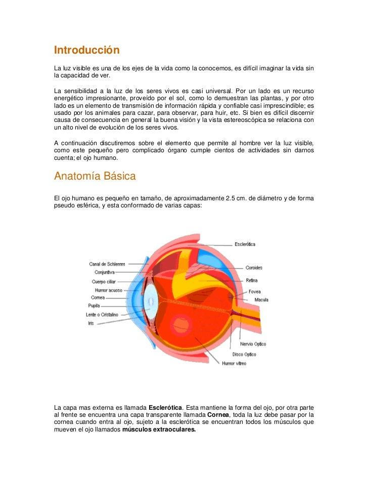 Diagrama De Flujo Del Ojo - Trusted Wiring Diagrams •