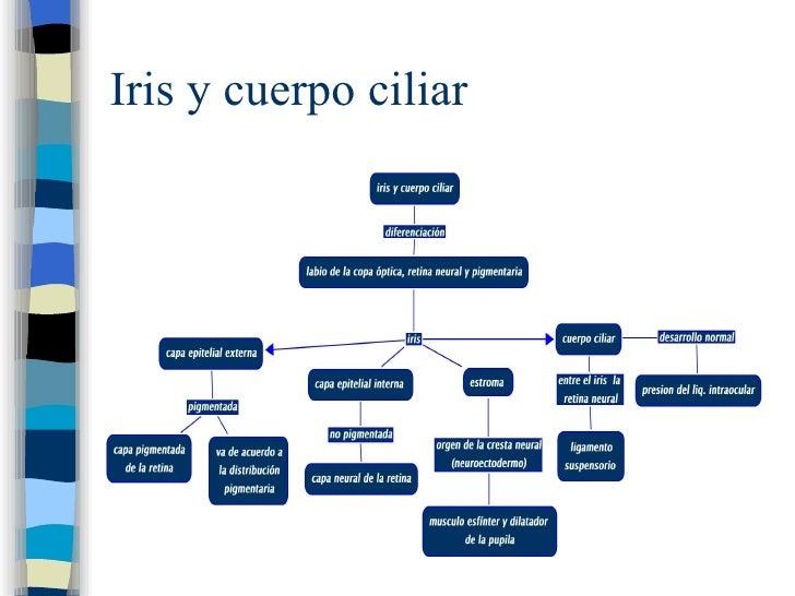 Iris y cuerpo ciliar