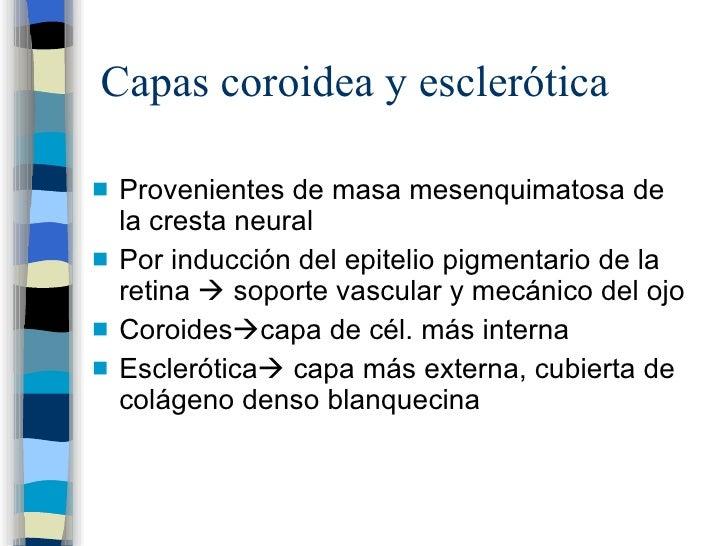 Capas coroidea y esclerótica <ul><li>Provenientes de masa mesenquimatosa de la cresta neural </li></ul><ul><li>Por inducci...