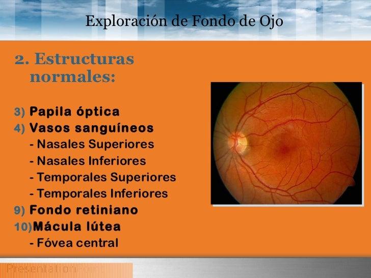 Vista de Bola de Agua versi/ón en Caja de Regalo Puntos Rojos en el Iris Vista de Pollo Espejo hologr/áfico Doc Owl