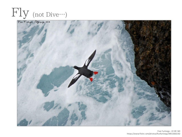 Fly (not Dive…)  Five Furlongs : CC BY-ND  https://www.flickr.com/photos/fivefurlongs/4851660282