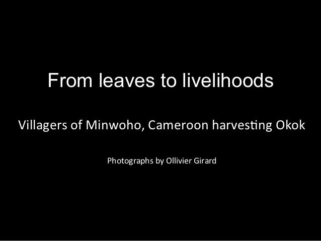 From leaves to livelihoodsVillagers	  of	  Minwoho,	  Cameroon	  harves4ng	  Okok	                                  	     ...