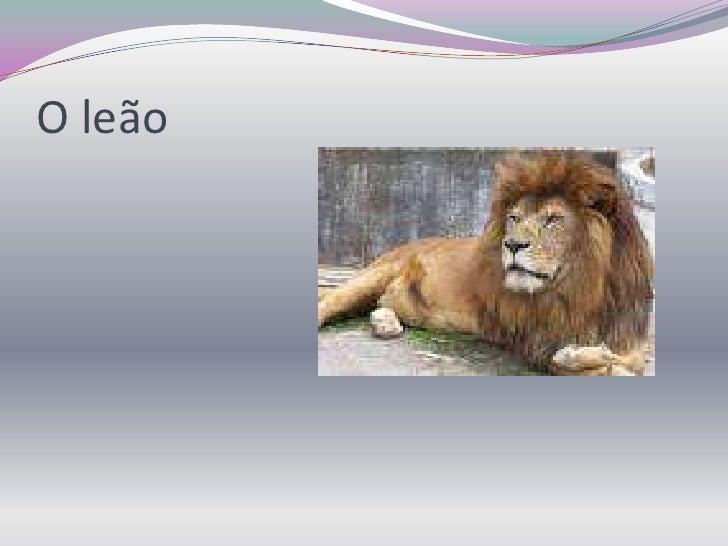 O leão<br />