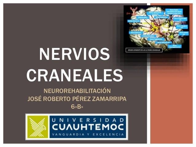 NERVIOS CRANEALES NEUROREHABILITACIÓN JOSÉ ROBERTO PÉREZ ZAMARRIPA 6»B»