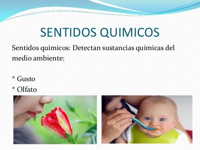 SENTIDOS QUIMICOS Sentidos químicos: Detectan sustancias químicas del medio ambiente: * Gusto * Olfato