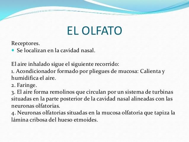 EL OLFATO Receptores.  Se localizan en la cavidad nasal. El aire inhalado sigue el siguiente recorrido: 1. Acondicionador...