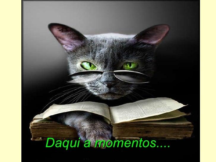 Olhos de gato_magico - ismae Slide 2