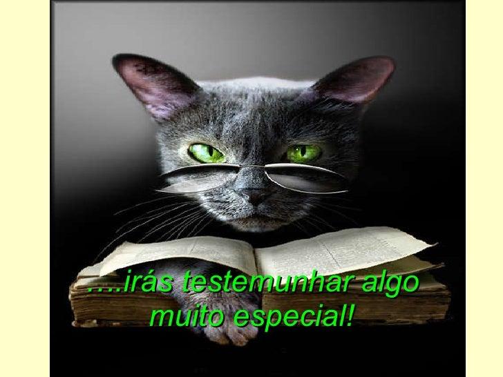 Olhos de gato_magico - ismae Slide 3