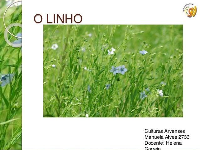 O LINHO  Culturas Arvenses  Manuela Alves 2733  Docente: Helena  Correia
