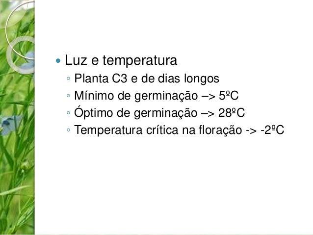  Luz e temperatura  ◦ Planta C3 e de dias longos  ◦ Mínimo de germinação –> 5ºC  ◦ Óptimo de germinação –> 28ºC  ◦ Temper...