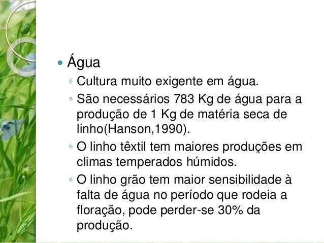  Água  ◦ Cultura muito exigente em água.  ◦ São necessários 783 Kg de água para a  produção de 1 Kg de matéria seca de  l...