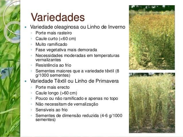 Variedades   Variedade oleaginosa ou Linho de Inverno  ◦ Porte mais rasteiro  ◦ Caule curto (<60 cm)  ◦ Muito ramificado ...