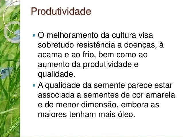 Produtividade   O melhoramento da cultura visa  sobretudo resistência a doenças, à  acama e ao frio, bem como ao  aumento...