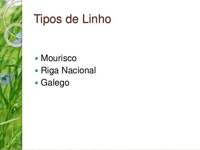 Tipos de Linho   Mourisco   Riga Nacional   Galego