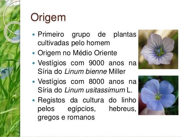 Origem   Primeiro grupo de plantas  cultivadas pelo homem   Origem no Médio Oriente   Vestígios com 9000 anos na  Síria...