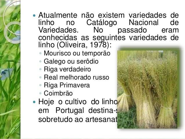 Atualmente não existem variedades de  linho no Catálogo Nacional de  Variedades. No passado eram  conhecidas as seguinte...