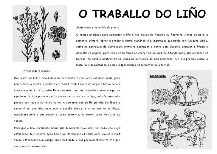 O TRABALLO DO LIÑO                                              Sementado e recollida da planta                           ...