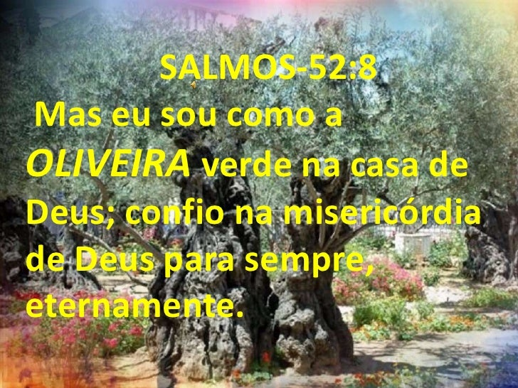 SALMOS-52:8 Mas eu sou como a OLIVEIRA verde na casa de Deus; confio na misericórdia de Deus para sempre, eternamente.