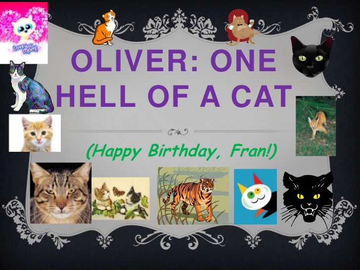 OLIVER: ONEHELL OF A CAT (Happy Birthday, Fran!)