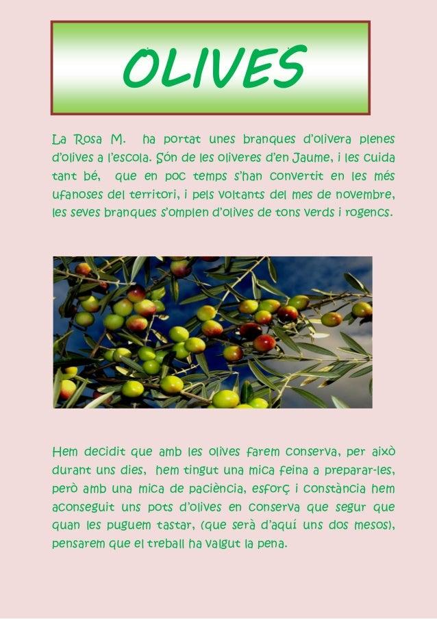 OLIVESLa Rosa M.      ha portat unes branques d'olivera plenesd'olives a l'escola. Són de les oliveres d'en Jaume, i les c...
