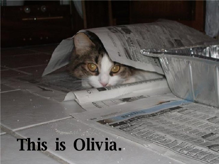 This is Olivia.