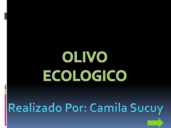 Olivo Y susProyectos Pensionado Olivo esta apoyando a la Municipalidad de Riobamba para que haya menos basura en las calle...