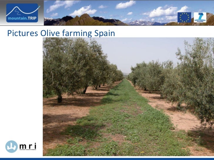 Pictures Olive farming Spain