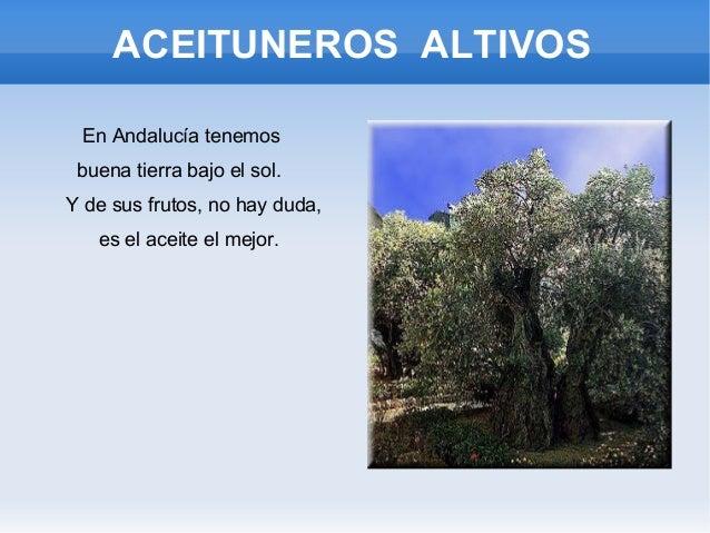 ACEITUNEROS ALTIVOS En Andalucía tenemos buena tierra bajo el sol. Y de sus frutos, no hay duda, es el aceite el mejor.