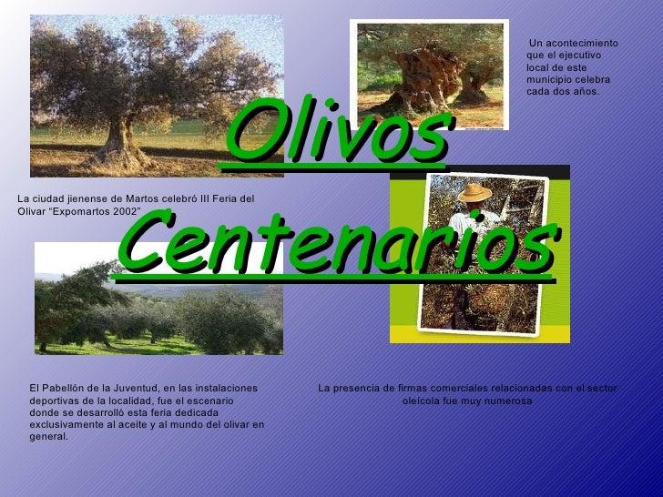 """Olivos Centenarios La ciudad jienense de Martos celebró III Feria del Olivar """"Expomartos 2002"""" Un acontecimiento que el ej..."""
