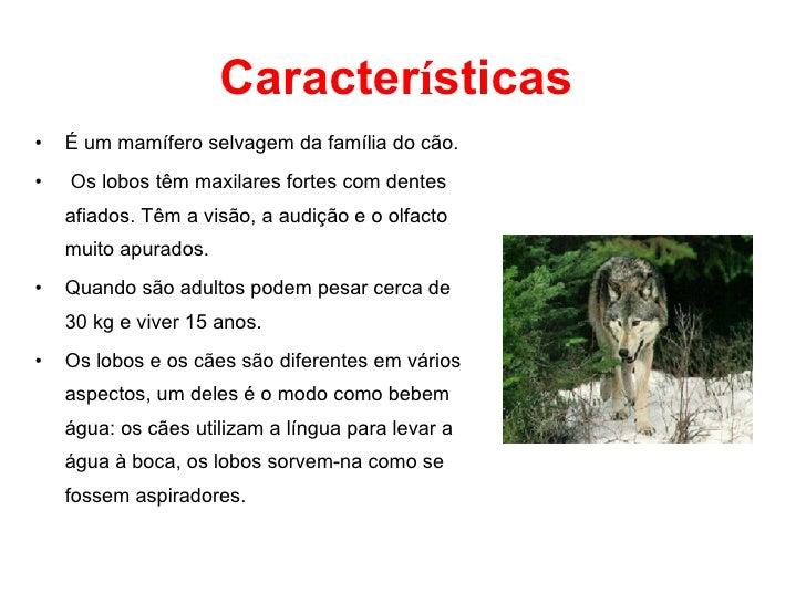 Caracter í sticas <ul><li>É um mamífero selvagem da família do cão. </li></ul><ul><li>Os lobos têm maxilares fortes com de...