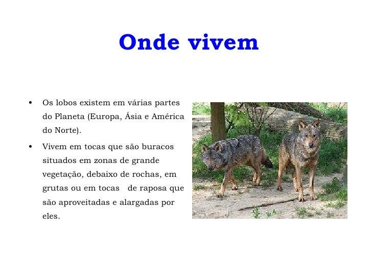 Onde vivem <ul><li>Os lobos existem em várias partes do Planeta (Europa, Ásia e América do Norte).  </li></ul><ul><li>Vive...