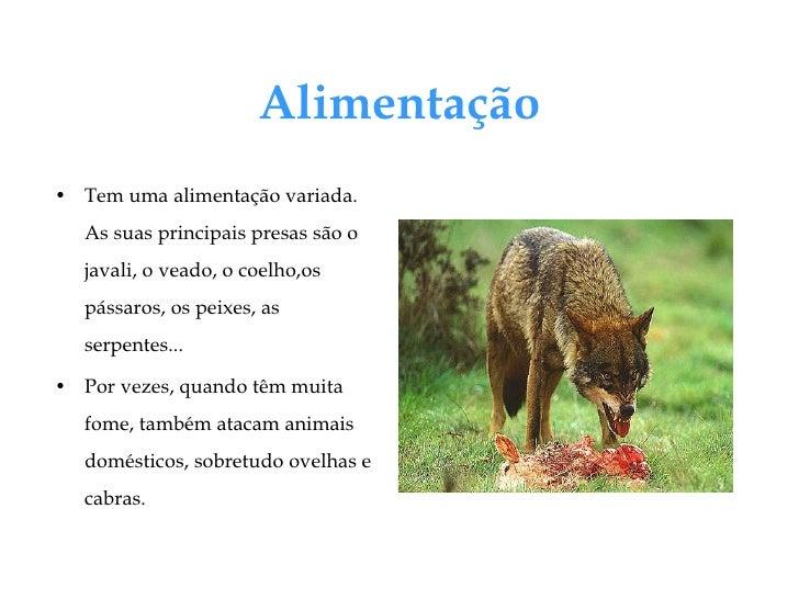 Alimentação <ul><li>Tem uma alimentação variada. As suas principais presas são o javali, o veado, o coelho,os pássaros, os...