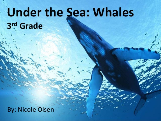 Under the Sea: Whales rd 3  Grade  By: Nicole Olsen