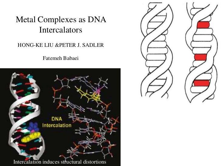 Metal Complexes as DNA       Intercalators  HONG-KE LIU &PETER J. SADLER             Fatemeh BabaeiIntercalation induces s...