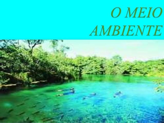 AS PRINCIPAIS COISAS DO MEIO AMBIENTE SÃO: