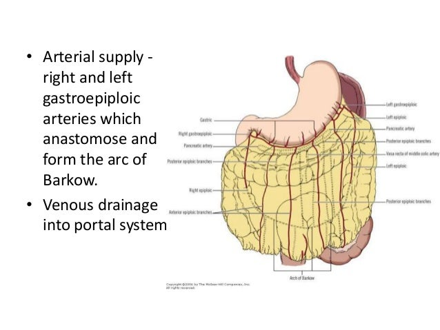 Omentum – anatomy, pathological conditions and surgical importance
