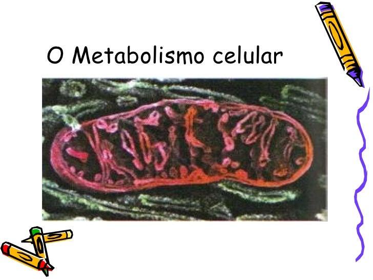 O Metabolismo celular