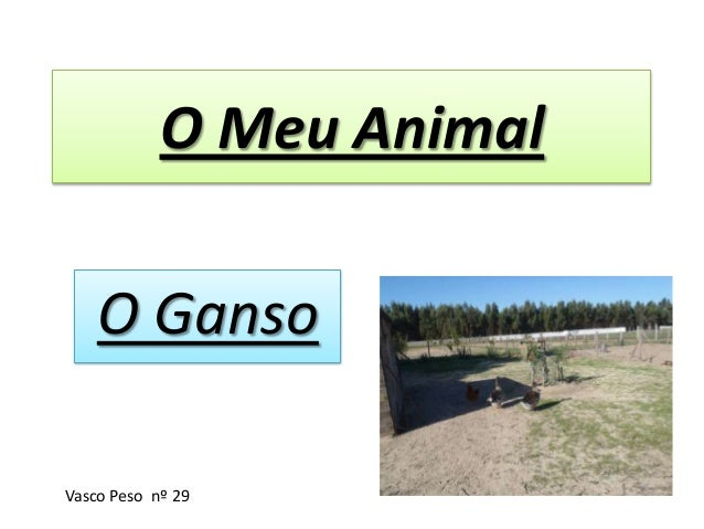 O Meu Animal O Ganso Vasco Peso nº 29
