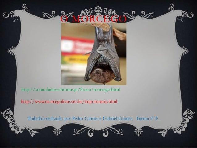 O MORCEGO  http://sotaodaines.chrome.pt/Sotao/morcego.html http://www.morcegolivre.vet.br/importancia.html Trabalho realiz...