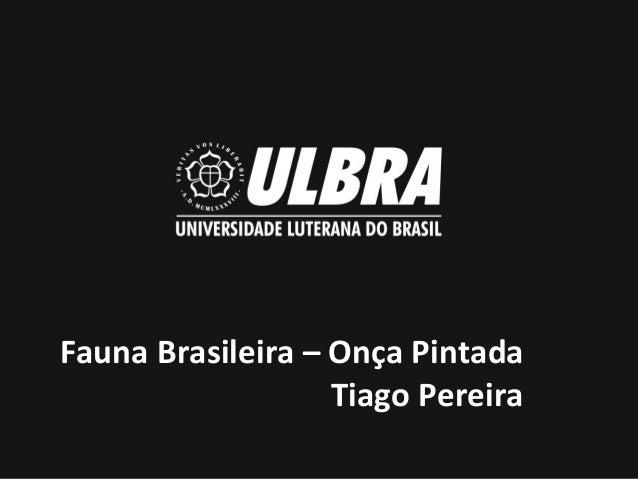 Fauna Brasileira – Onça Pintada Tiago Pereira