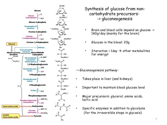 What is Glucagon?