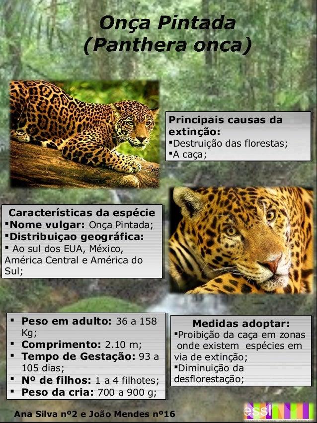 Características da espécie Nome vulgar:OnçaPintada; Distribuiçao geográfica:  AosuldosEUA,México, AméricaCentra...