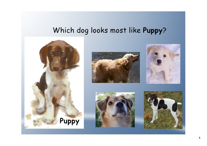 Which dog looks most like Puppy?       Puppy                                     1