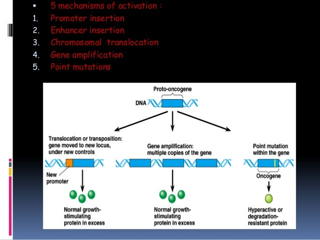 Insertion mutation inactivate promoter