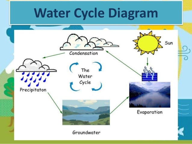 O'Neill, Molly The Water Cycle