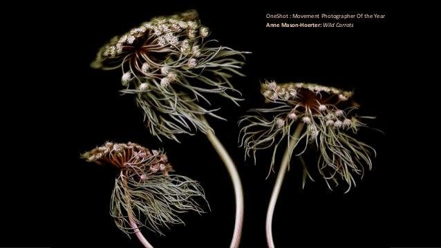 OneShot : Movement Photographer Of the Year Anne Mason-Hoerter: Wild Carrots