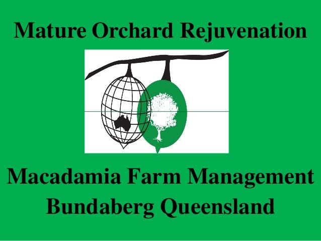 Mature Orchard RejuvenationMacadamia Farm Management   Bundaberg Queensland