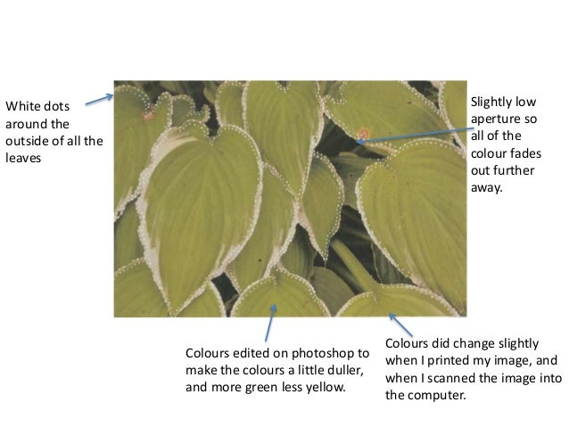 White dots  around the  outside of all the  leaves  Colours edited on photoshop to  make the colours a little duller,  and...