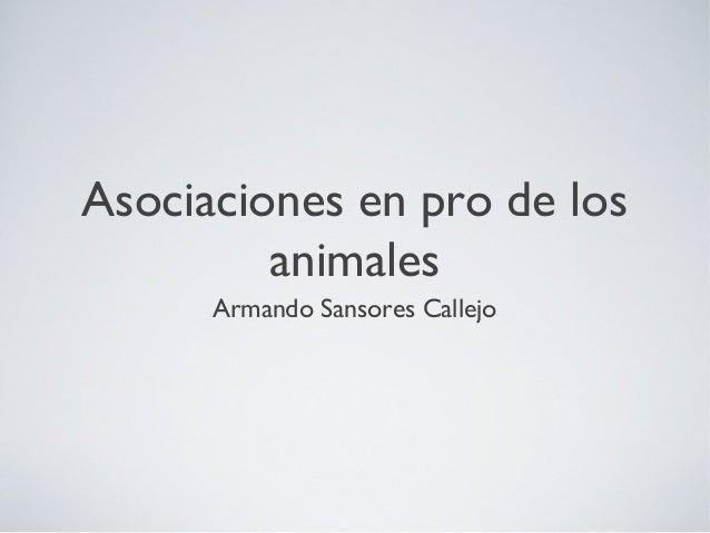 Asociaciones en pro de los animales Armando Sansores Callejo