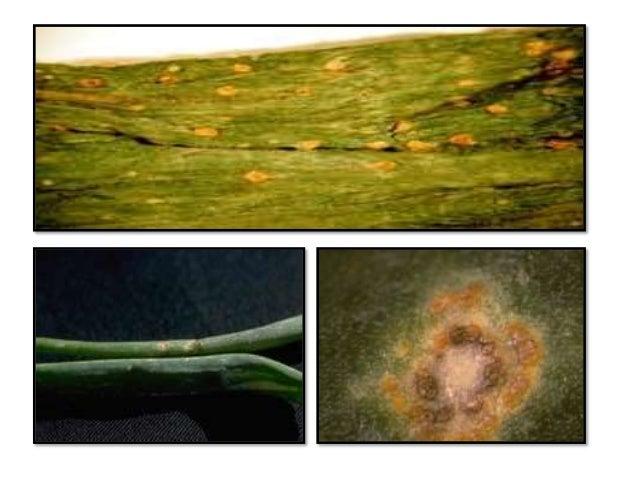 Taxonomy - Garlic mosaic virus - uniprot.org